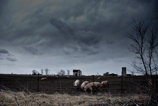 piggies by Jim Robertson
