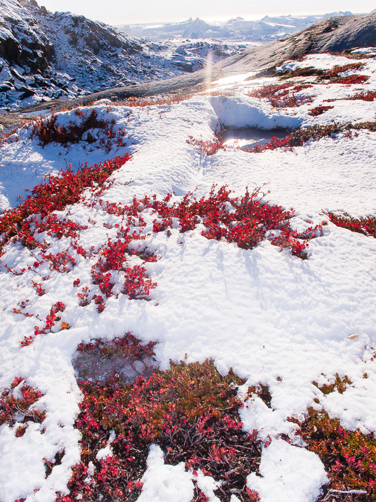 PeterVoigt-By_Boat_to_Ilulissat__Greenland-8_-_ilulissat_flora_by_peter_voigt